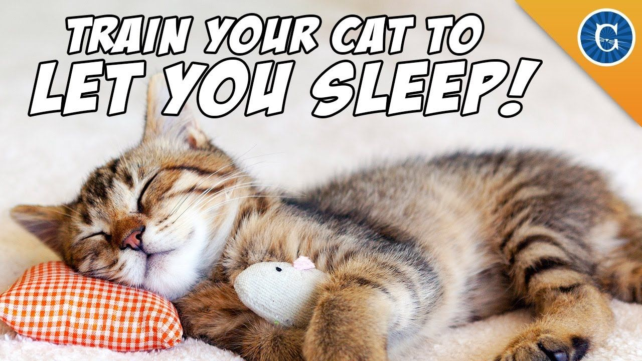 Train Your Cat To Let You Sleep Cat Meowing At Night Cat Training Sleeping Kitten