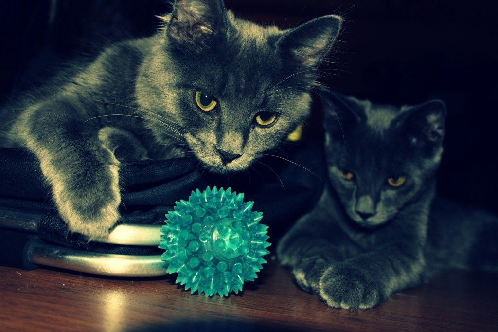 """A great photo taken by my daughter Sarah:  """"Photo of cats staring at a toy"""""""
