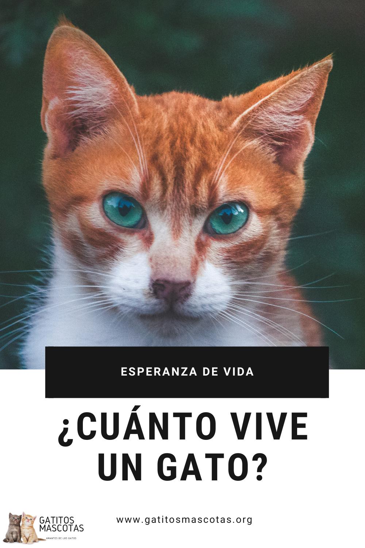 Esperanza De Vida De Un Gato Cuánto Vive Un Gato Gatos Edad De Gatos Gatos Salvajes