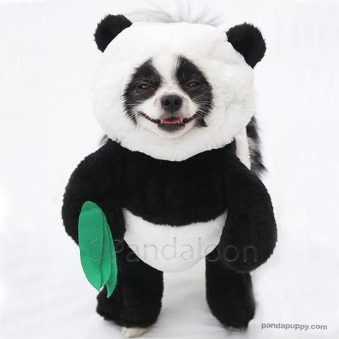 Panda Dog Pet Costume New with Tags