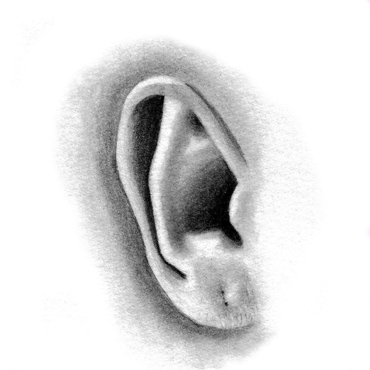 Portraiture Foundations In Pencil And Charcoal How To Draw A Photorealistic  Ear