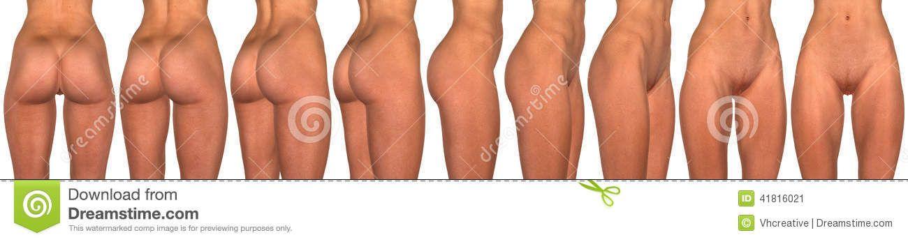 female-pelvis-abdomen-buttocks-hips-thighs-navel-d-anatomical ...