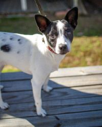 Adopt Bella On Beautiful Dogs Terrier Mix Dogs Dogs