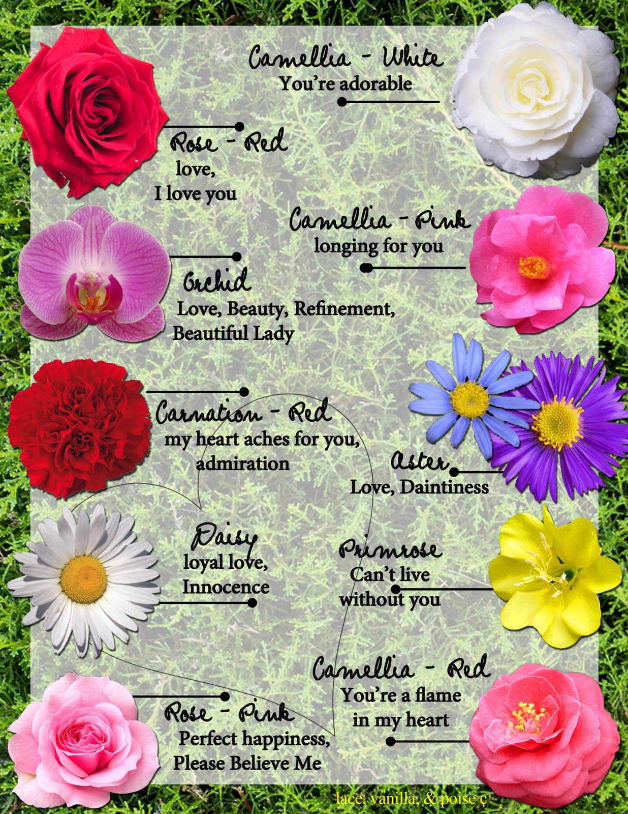 Meanings of Flowers Flower meanings, Language of flowers