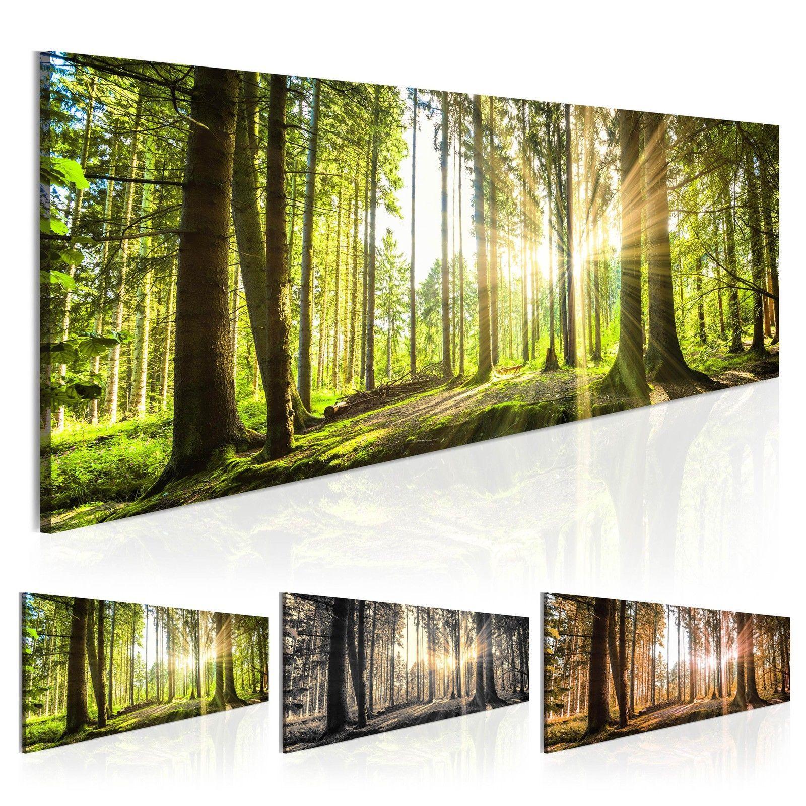 Leinwand Bilder Xxl Fertig Aufgespannt Bild Wald Natur BÄume C B 0077 B B Landschaftsposter Waldbilder Landschaftskunst