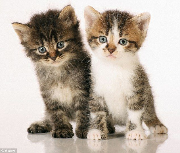 Feline fictional? Bella and Oliver are 2014's most popular