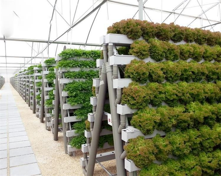 A type tower hydroponics system for greenhouse