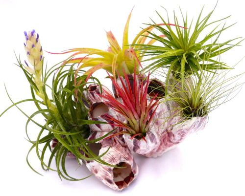 Colorful Airplants
