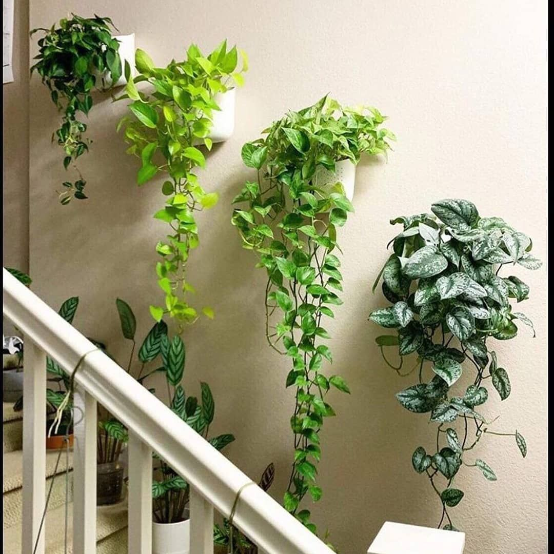 Pin By Tinky Ngarmkam On Indoor Plants In 2020 Indoor Plant Wall