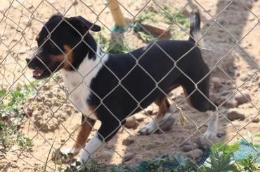 Hund Chihuahua Bodeguero Mix Mischling Hundin 3 Jahre In Deizisau Baden Wurttemberg Chihuahua Hunde Haustier