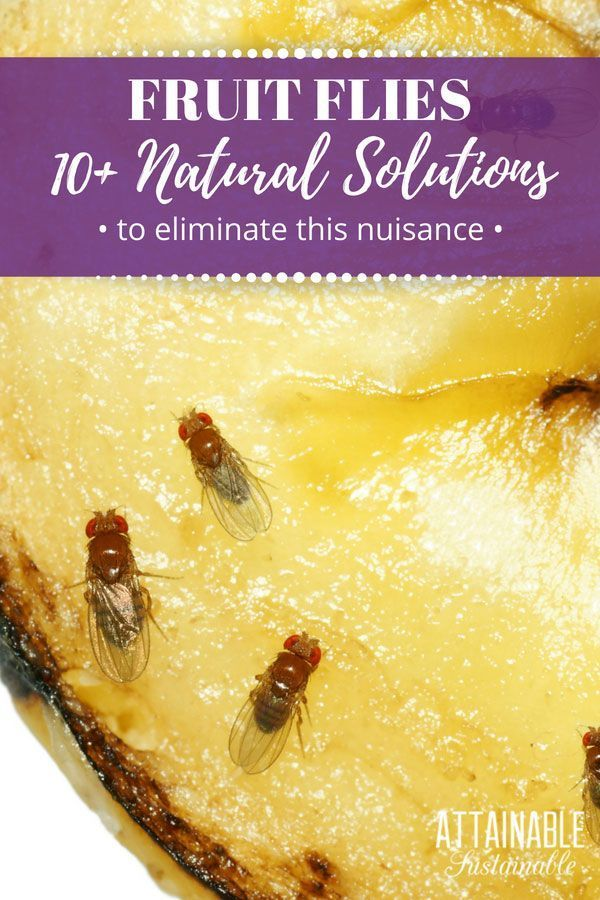 Get Rid Of Fruit Flies: Prevention And 4 Ways To Make A