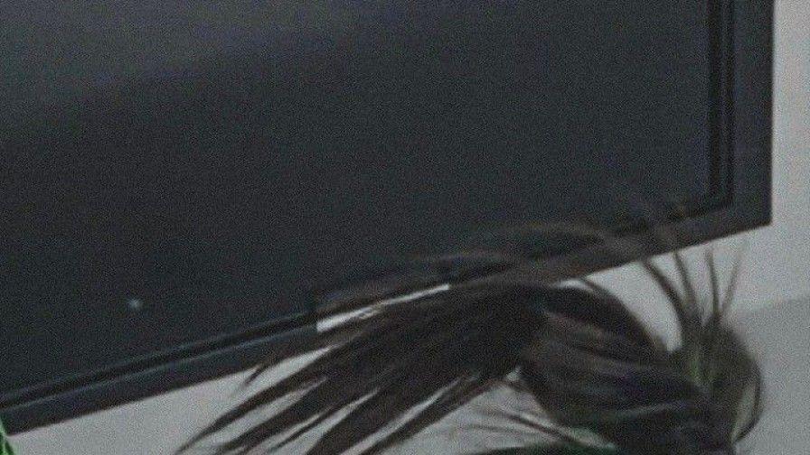 اجمل صور Billie Eilish 134 صور بيلي إيليش Photo
