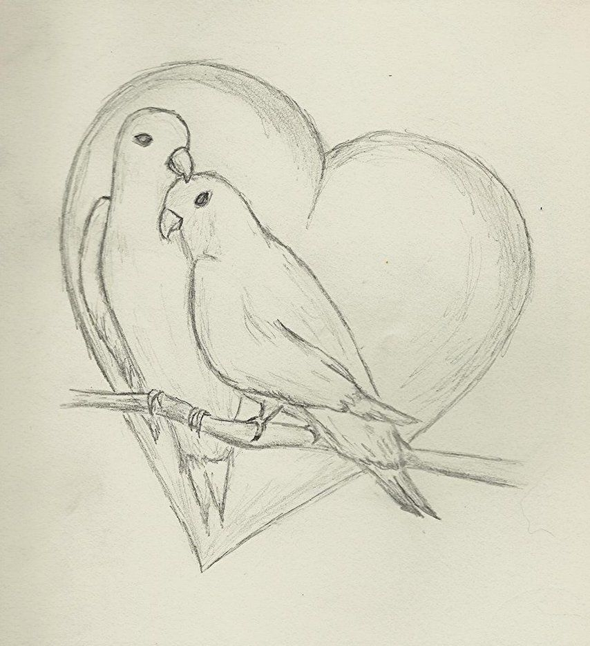 Love Birds Dove Branch Heart Sketch Easy Love Drawings Sketches Bird Drawings