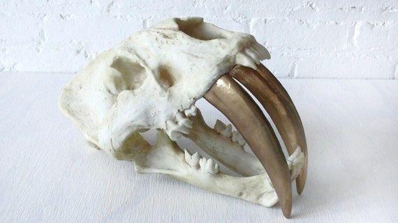 — Skull-King :: Design Field Notes —