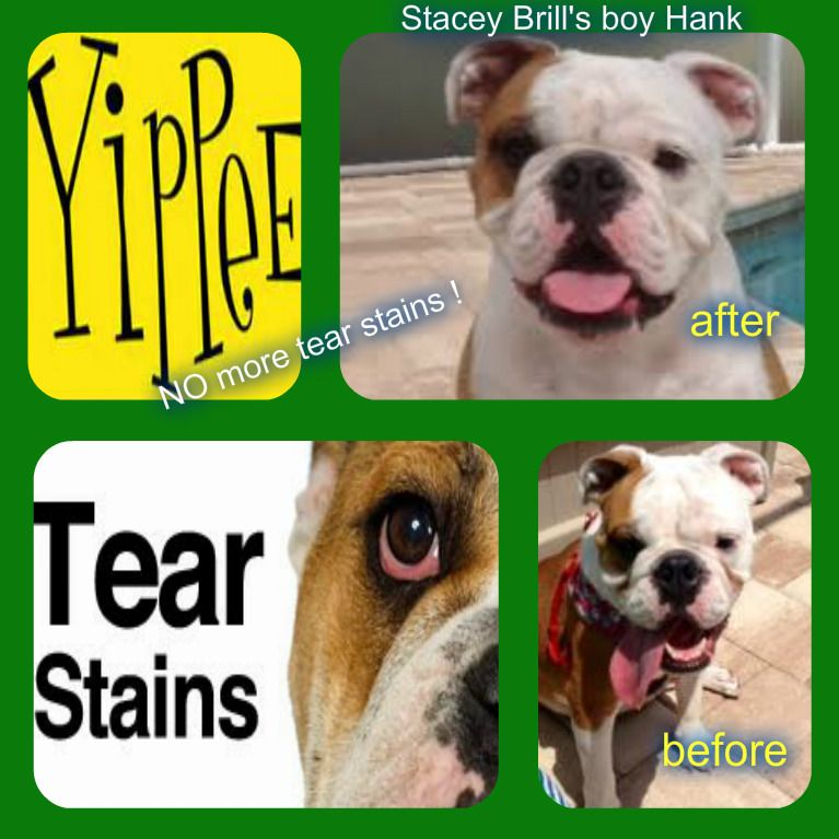 Remedy For Tear Stains In Dogs Pads For Tear Stains Tear