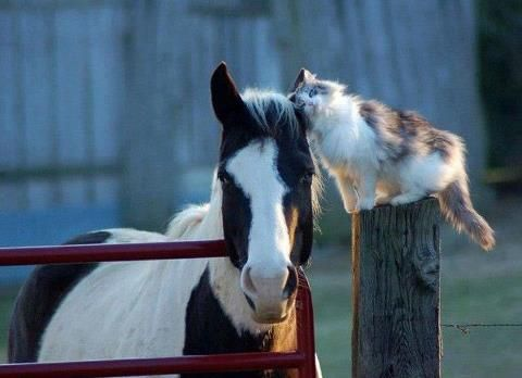 Horse with cat pal.