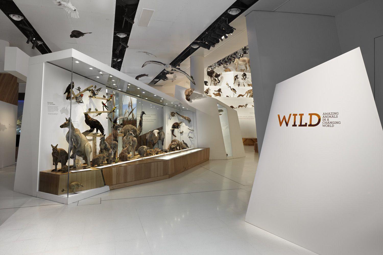 Exhibition Stand Design Melbourne : Wild melbourne museum exhibit g a lanhm pinterest