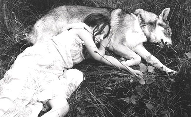 Napping With A Wolf