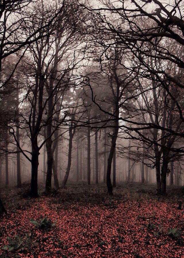 Pin By Dana Kay On Iphone Wallpaper Nature Pictures Foggy Forest Nature