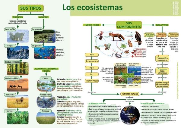 Infografías De Ciencias Naturales Tipos De Ecosistemas Ciencias Naturales Ciencias De La Naturaleza