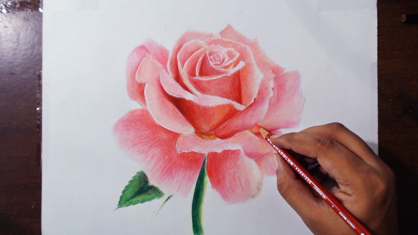 Drawing a rose flower drawing series 1 prismacolor pencils