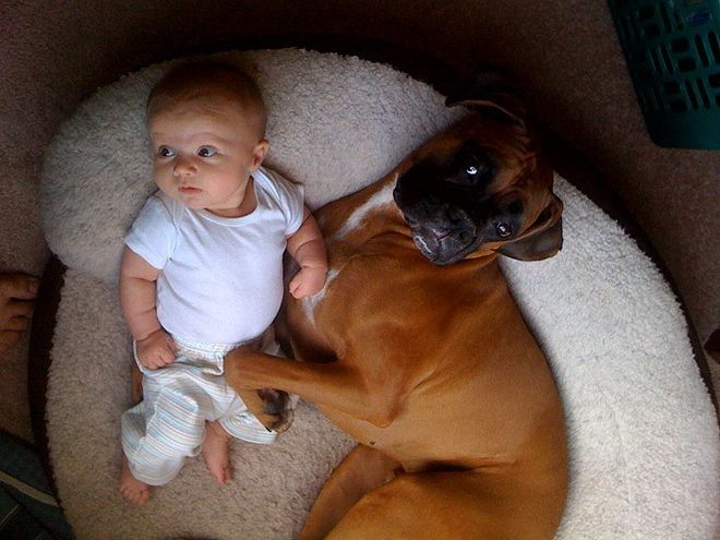 Most Inspiring Baby Brown Adorable Dog - e15b715f376a125b68c04e9041b06a23  Pictures_283488  .jpg