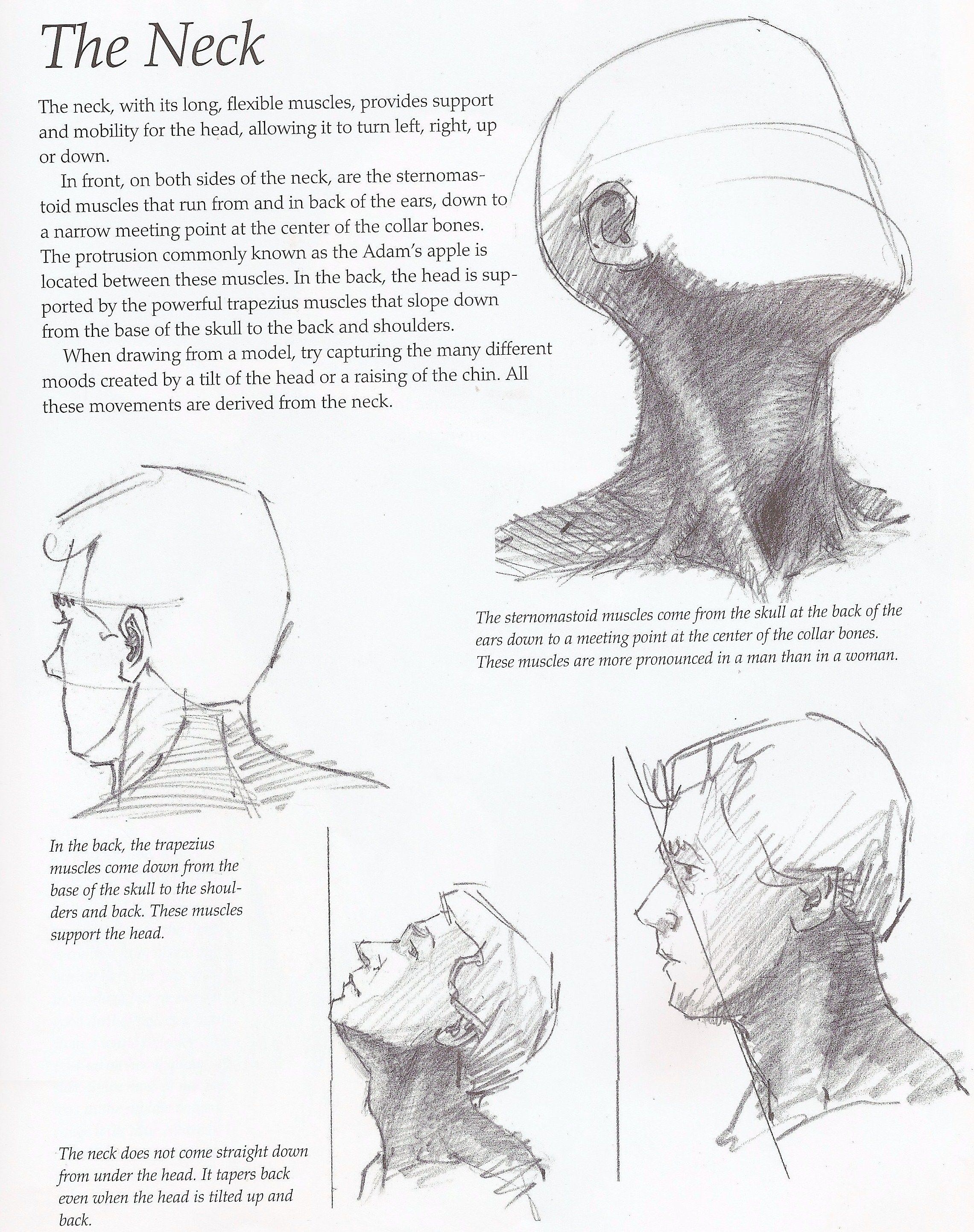 Drawing Tutorial How To Draw The Neck Drawing Tutorial Anatomy Drawing Portrait Drawing