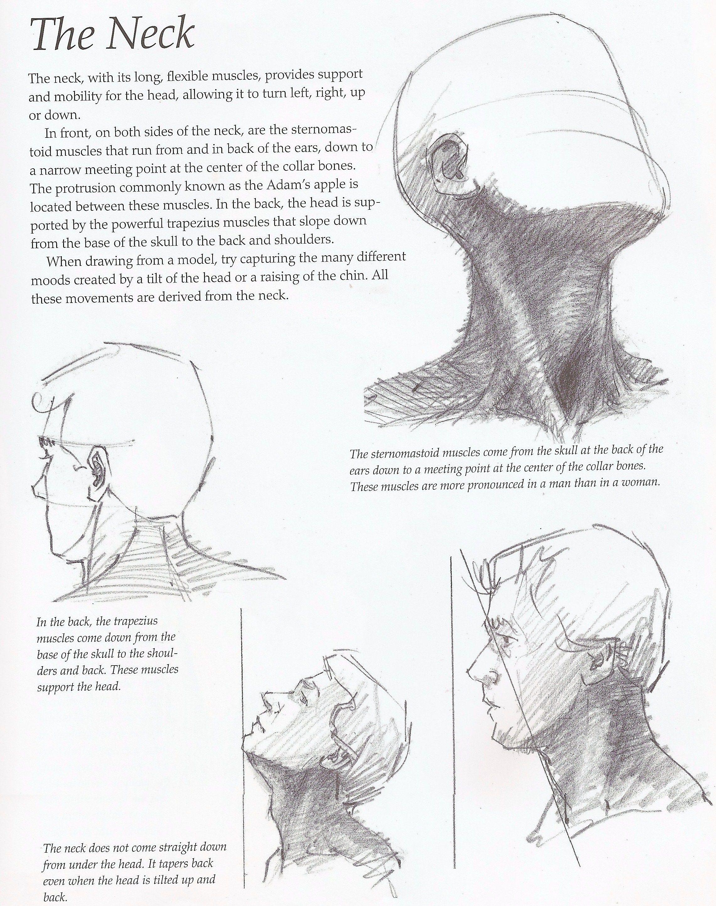 Drawing Tutorial Draw Paint P15 Drawings Art Drawings Neck
