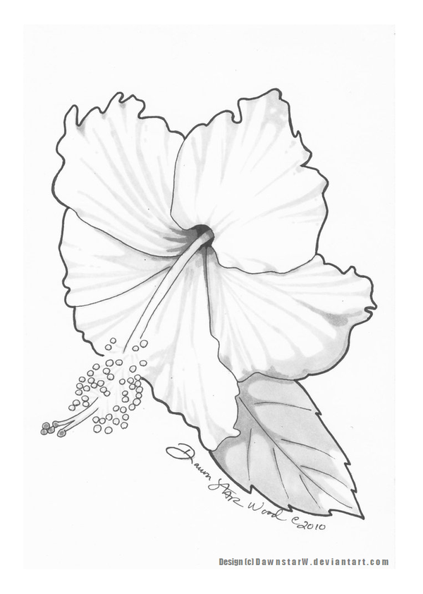 Hibiscus Tattoo Design Final By Dawnstarw On Deviantart Hibiscus Tattoo Hibiscus Drawing Flower Line Drawings
