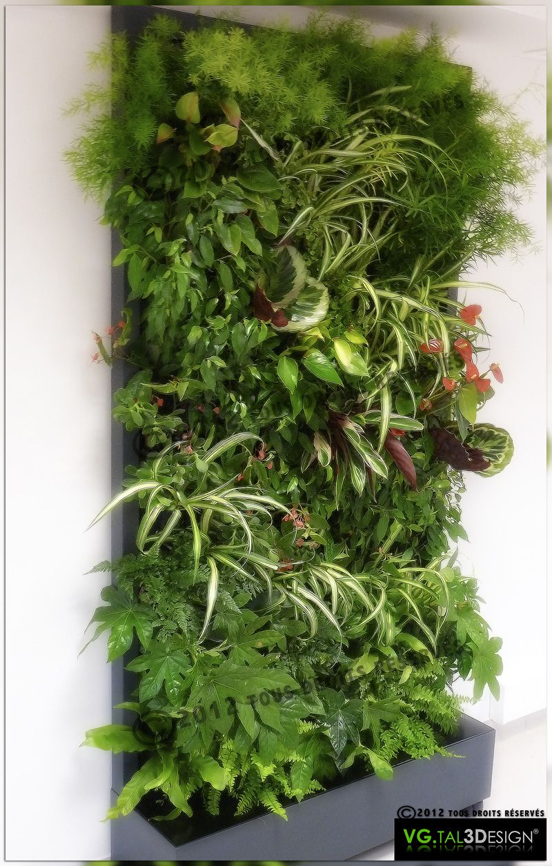 simple et rapide d 39 installation 100 naturelles plantes. Black Bedroom Furniture Sets. Home Design Ideas