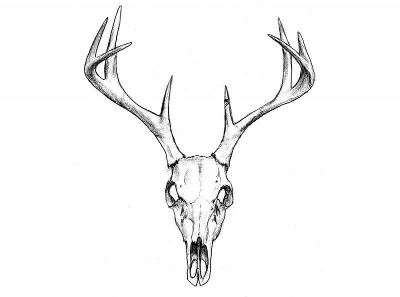 deer skull illustration - Google Search | Tattoo Ideas ...