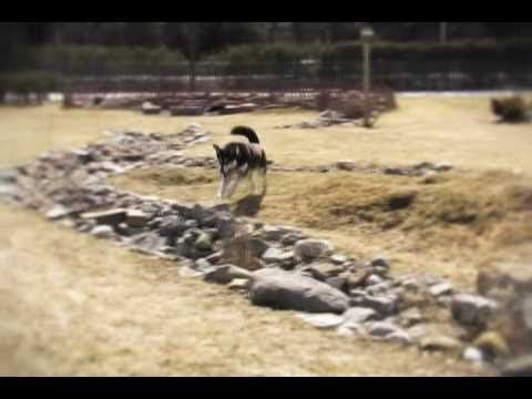 Keshet Kennels/Rescue - Spring Has Sprung