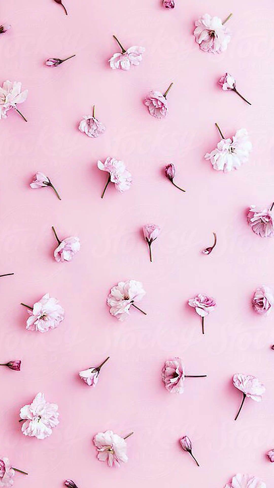 Ellioralorenzen Pastel Pink Wallpaper Cherry Blossom Background Pink Flowers Wallpaper