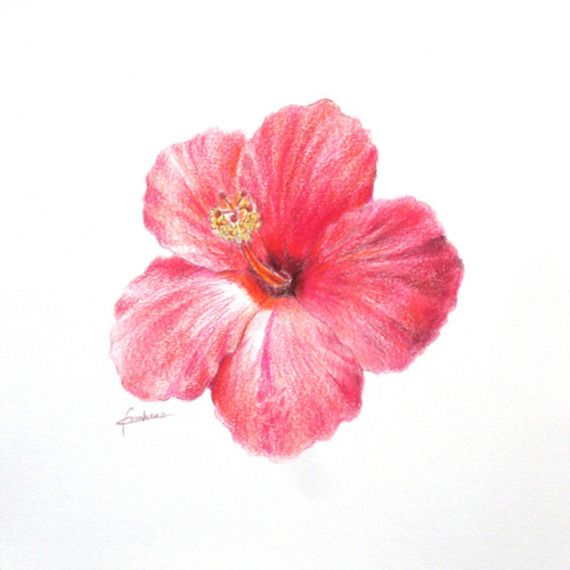 dessiner des roses - recherche google | tatoo | pinterest