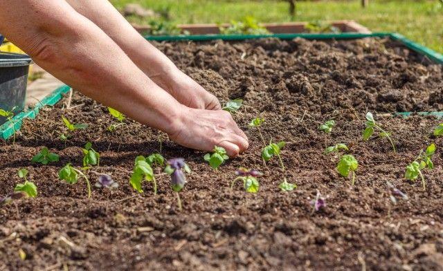 Orto e giardino, i lavori da fare a giugno. Un mese decisivo, con molti raccolti in arrivo