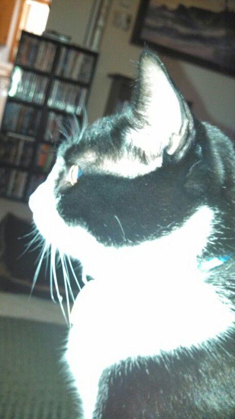 Flashy kitty