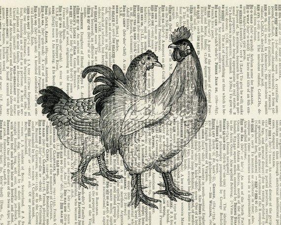 Chicken essay print off