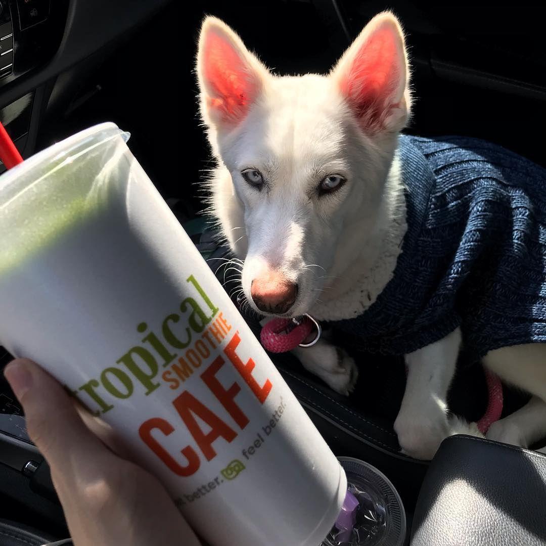 Dog And Dog Sweater Sold Separately Chlo Thehusky On Ig