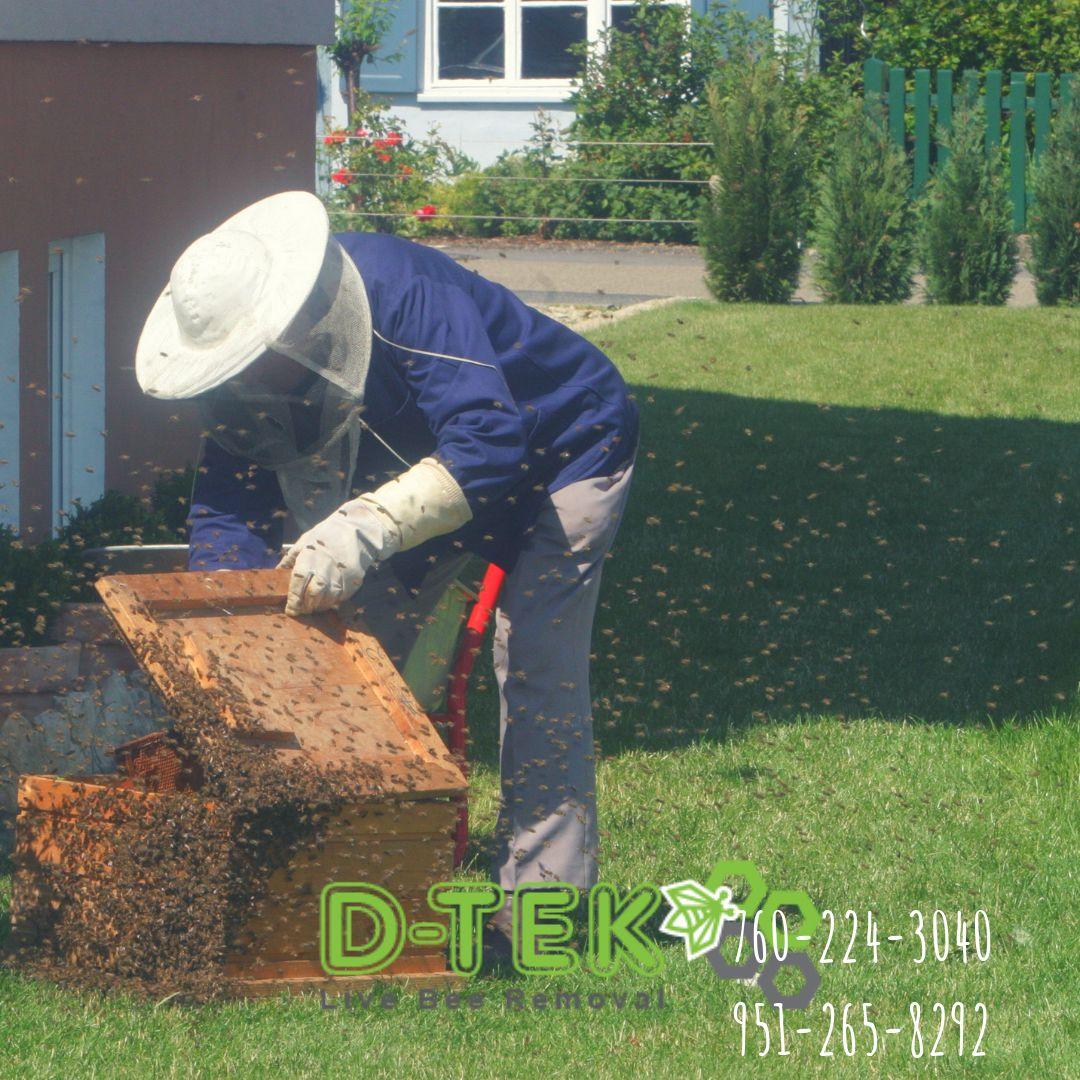 e16189ba35f2cb863168346b9f9f17e1 - How To Get Rid Of Bee Hive In Attic