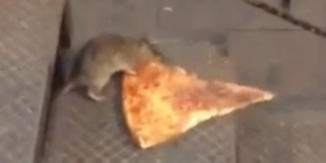 The VICE Guide to Right Now: Pizza Rat Is the Only Real New Yorker http://bit.ly/1gHEgFl