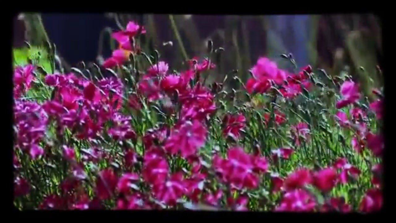 Flores Para El Recuerdo Flores Ebanisteria Perdida De Un Ser Querido