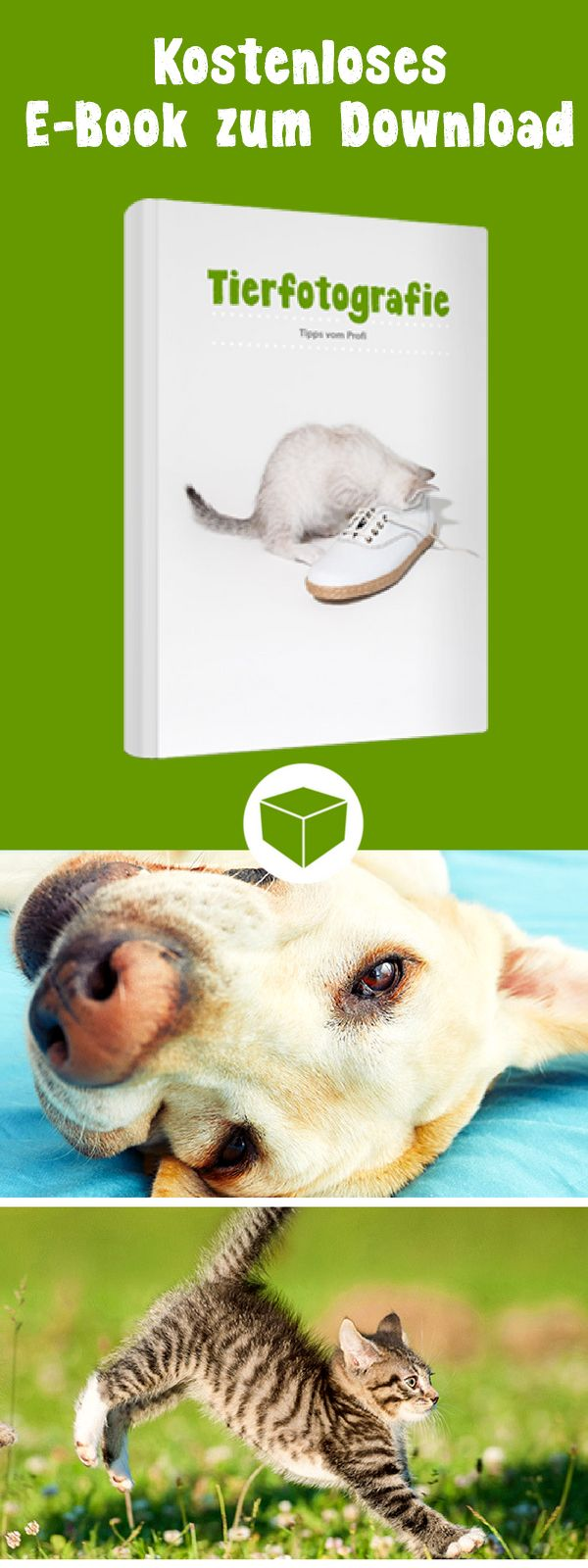 Kostenloses E Book Zur Perfekten Tierfotografie Vom Profi Die