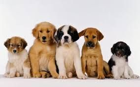 Meet My All Puppy Family Puppy Cuppy Stuppy Truppy And Snuppy