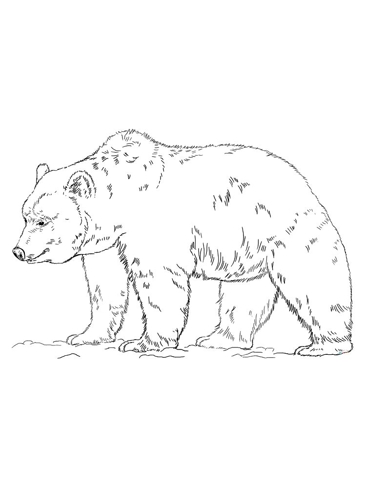 Grizzly Bear Coloring Pages Free The Following Is Our Bear Coloring Page Collection You Are Free To Animal Coloring Pages Bear Coloring Pages Coloring Pages