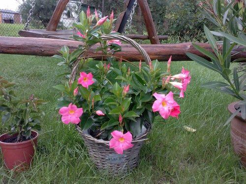 Sundevilla Plants Flowers