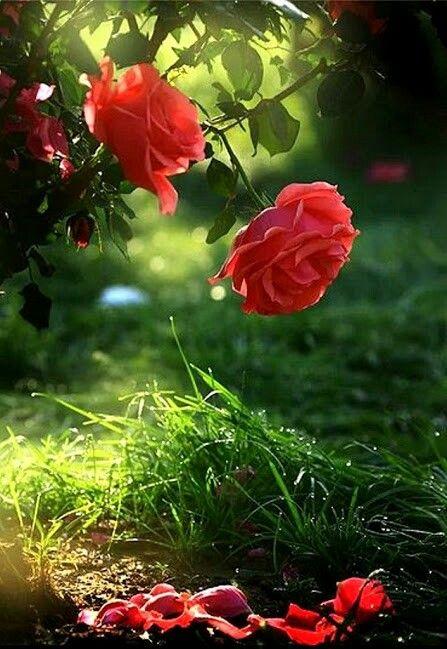 Phis Walpepar Hd Beautiful Flowers Beautiful Flowers Wallpapers Wallpaper Nature Flowers