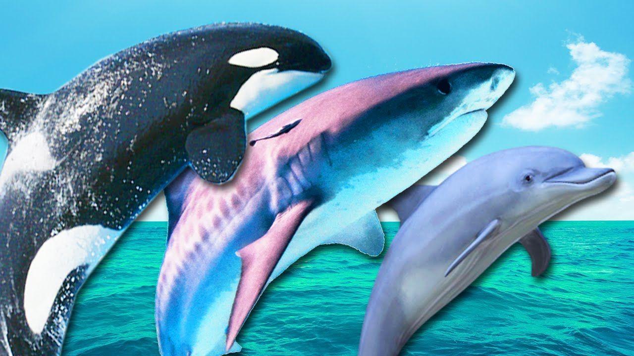 картинки киты акулы дельфины кабриолет был только
