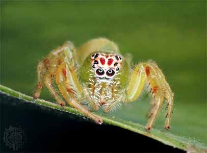 INVERTEBRATES | Help me, Spider webs and Scary clowns