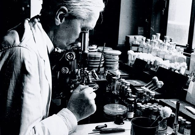 Penicillin Discovery The World S First Antibiotic Drug London