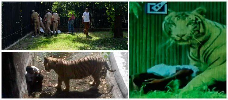 Tigre branco mata estudante em zoológico